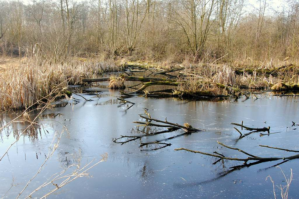 Nature picture:  / Chaos in het Loetbos /