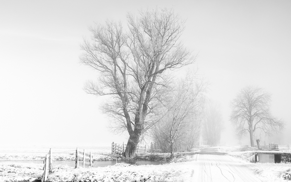 Nature picture:  / Sneeuw in de polder /