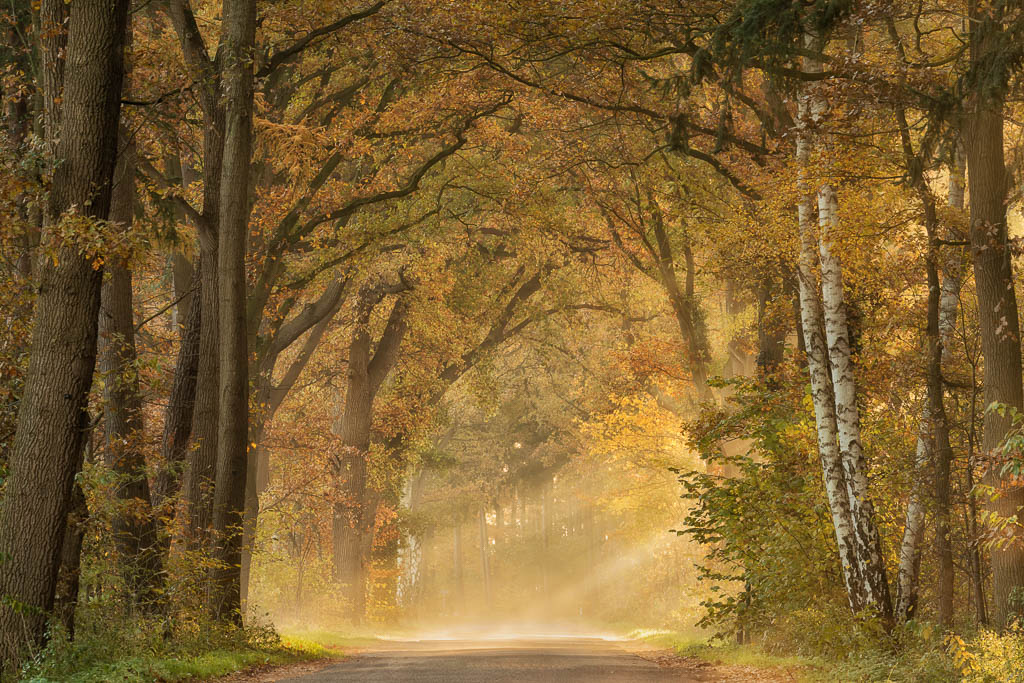 Nature picture:  / Herfst /