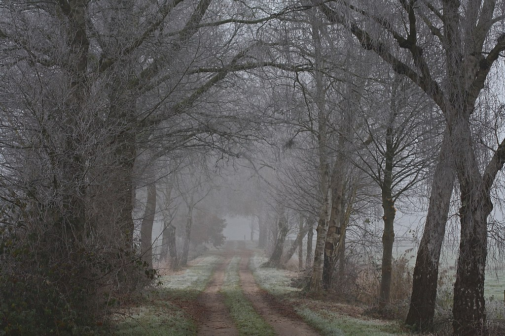 Nature picture:  / Mistig sfeertje / Misty Atmosphere