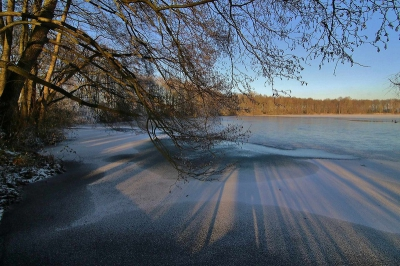 Nature picture:  / Winters beeld /