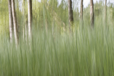 Nature picture: - / Gras schildering / Grass painting