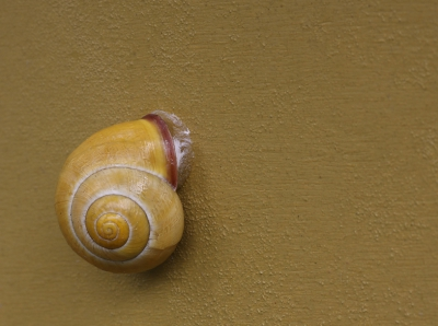 Nature picture: Cepaea nemoralis / Gewone Tuinslak / Brown-lipped Snail