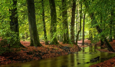 Nature picture:  / Hierdense Beek /