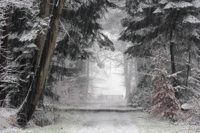 Nature picture:  / Winters bospad /