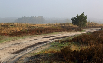 Nature picture:  / Paadje door de heide /